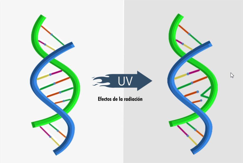 ADN-Virus_UVC